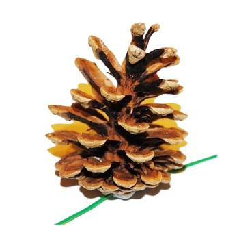Šišky - Vánoční dekorace - Borovicová šiška přírodní