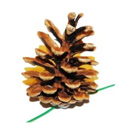 Vánoční dekorace - Borovicová šiška přírodní